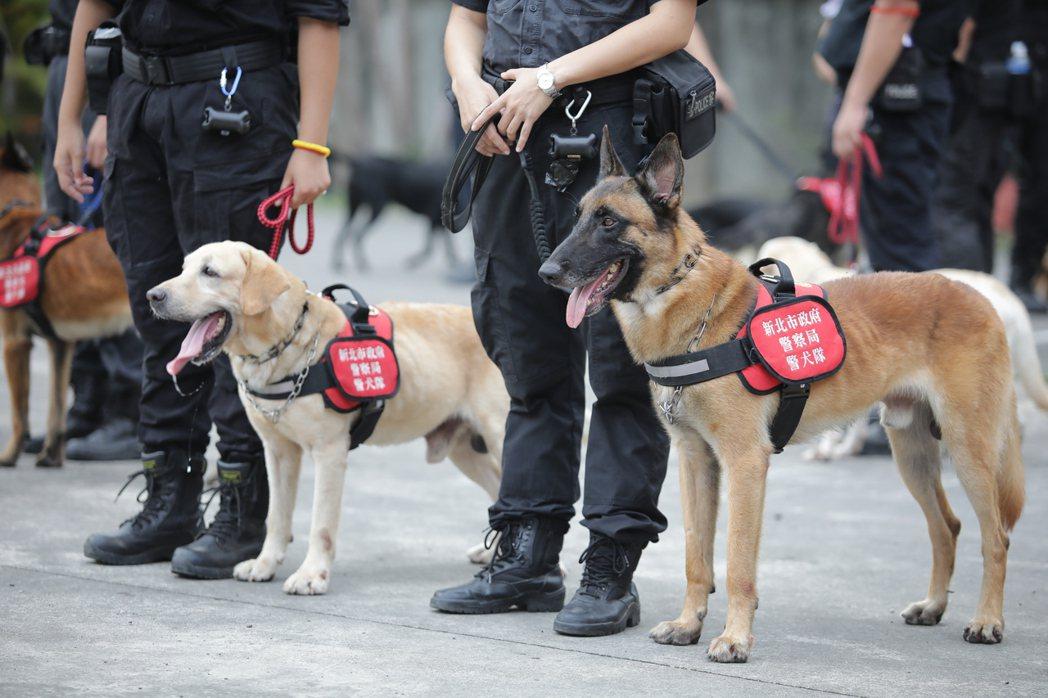 警犬的耳朵可以活動,能快速精準的定位聲音來源,其聽力比人類更為敏銳精準,聽見聲音...