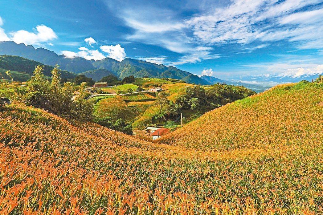 花蓮縣富里鄉的六十石山,每年金針花季花海盛放,如同美麗花毯。 圖/富里鄉農會提供