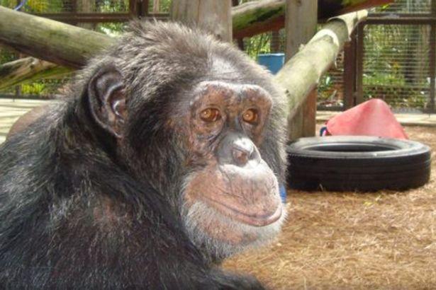 「泡泡」現在34歲,於佛羅里達州的動物庇護中心生活。圖/摘自 Center fo