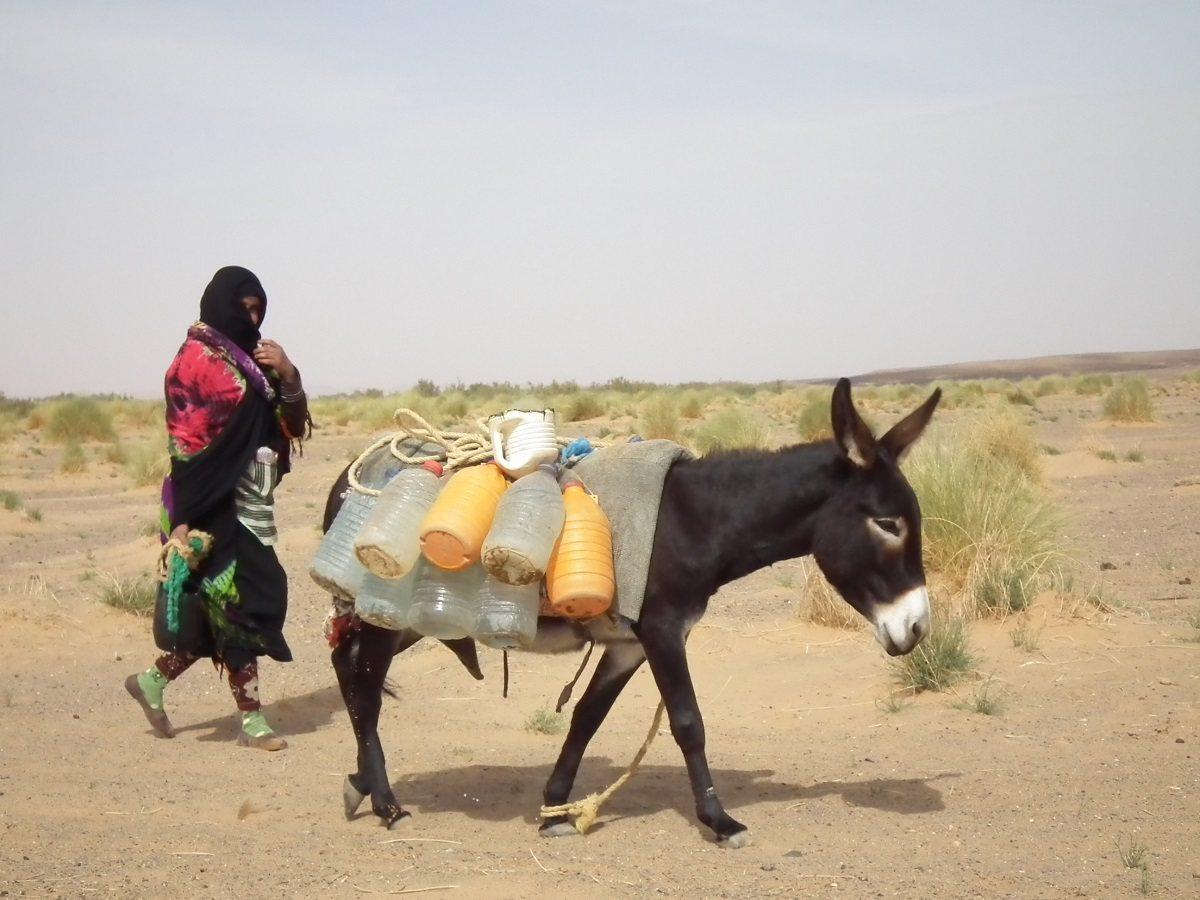 婦女每天牽著驢子,前往古井邊打水。