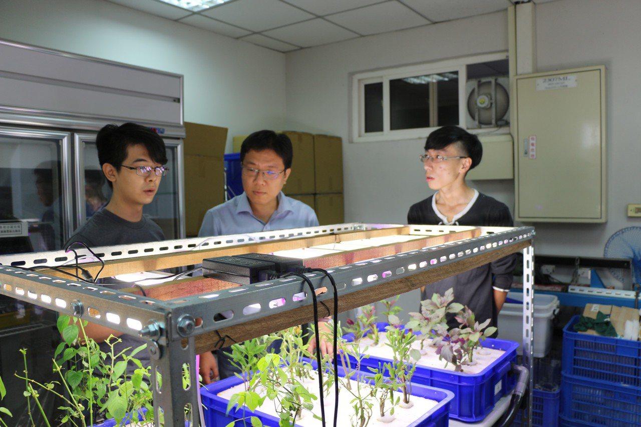 義守大學廖健森副教授(中)率團隊開發成功魚菜藻共生系統,生態自主循環更完整。記者...