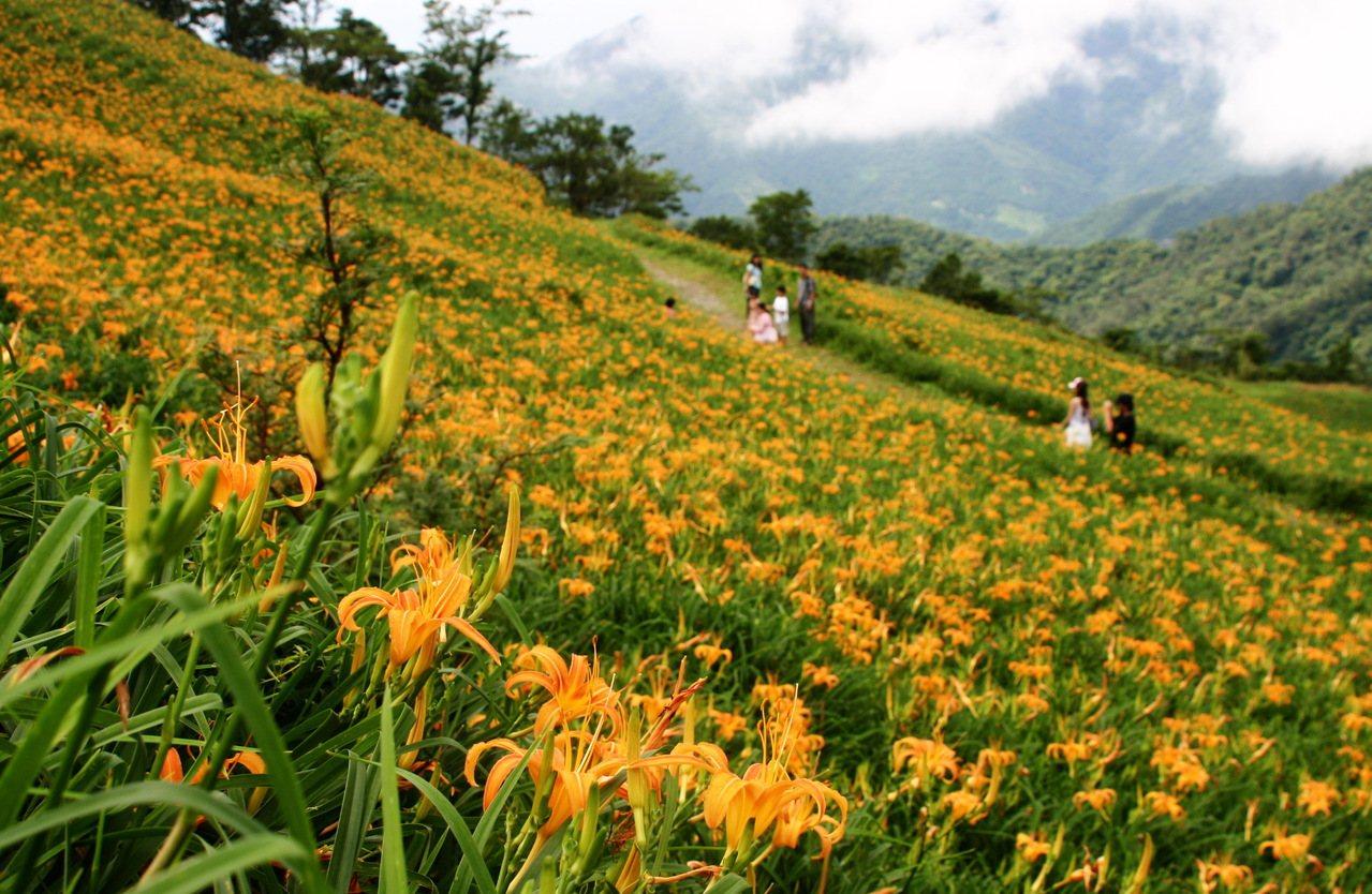 花東地區已進入金針花季,歡迎遊客來花東賞花,同時享受農村美食。記者羅紹平/翻攝