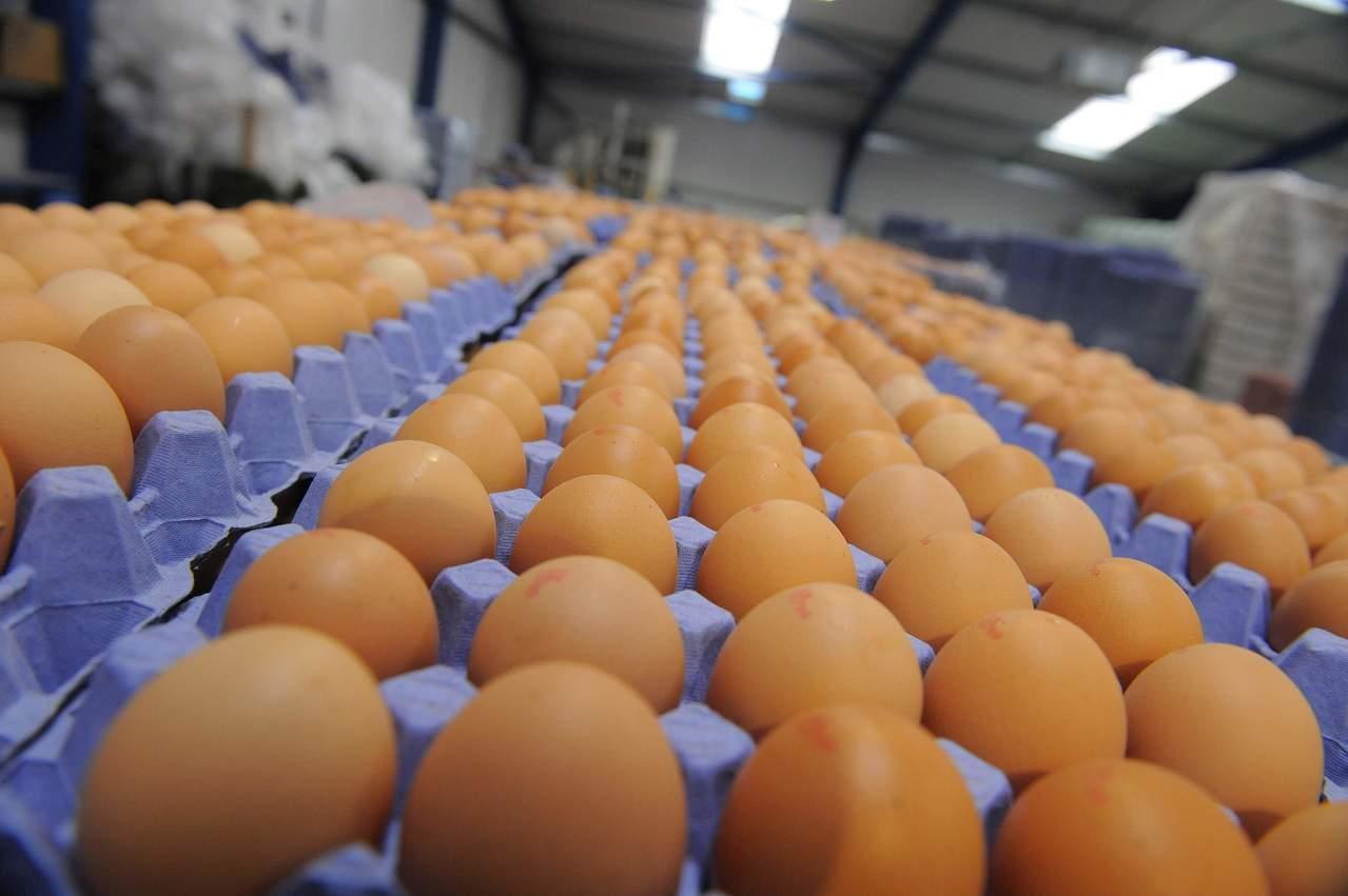 根據衛報報導,歐盟警告,被有毒殺蟲劑汙染的雞蛋可能已出現在英國等國家的商店。(圖/路透社)
