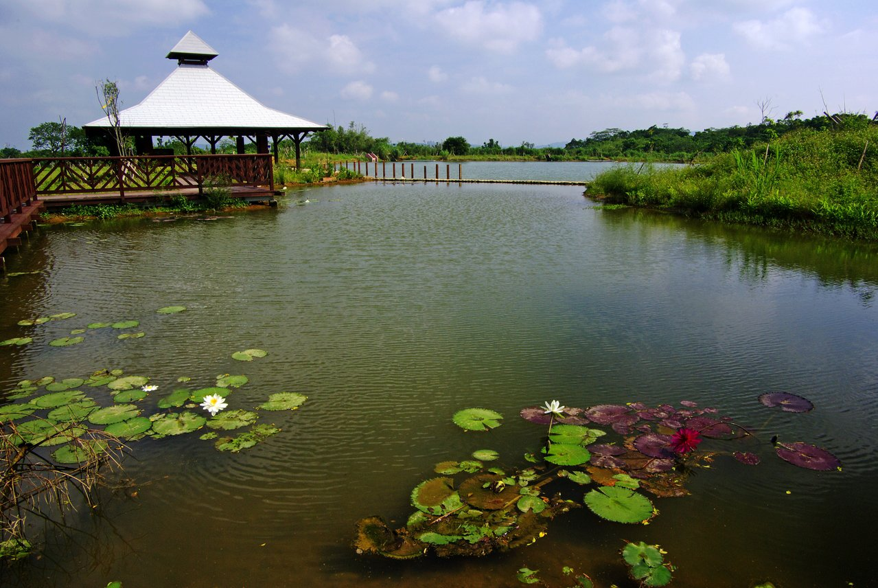 桃園市八德區埤塘生態公園。圖/八德區公所提供