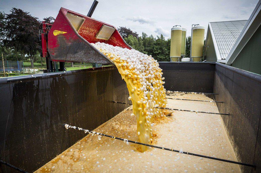 比利時案例的10天後,荷蘭食安署也緊急通報「荷蘭的雞蛋同樣驗出芬普尼」,接著德國...