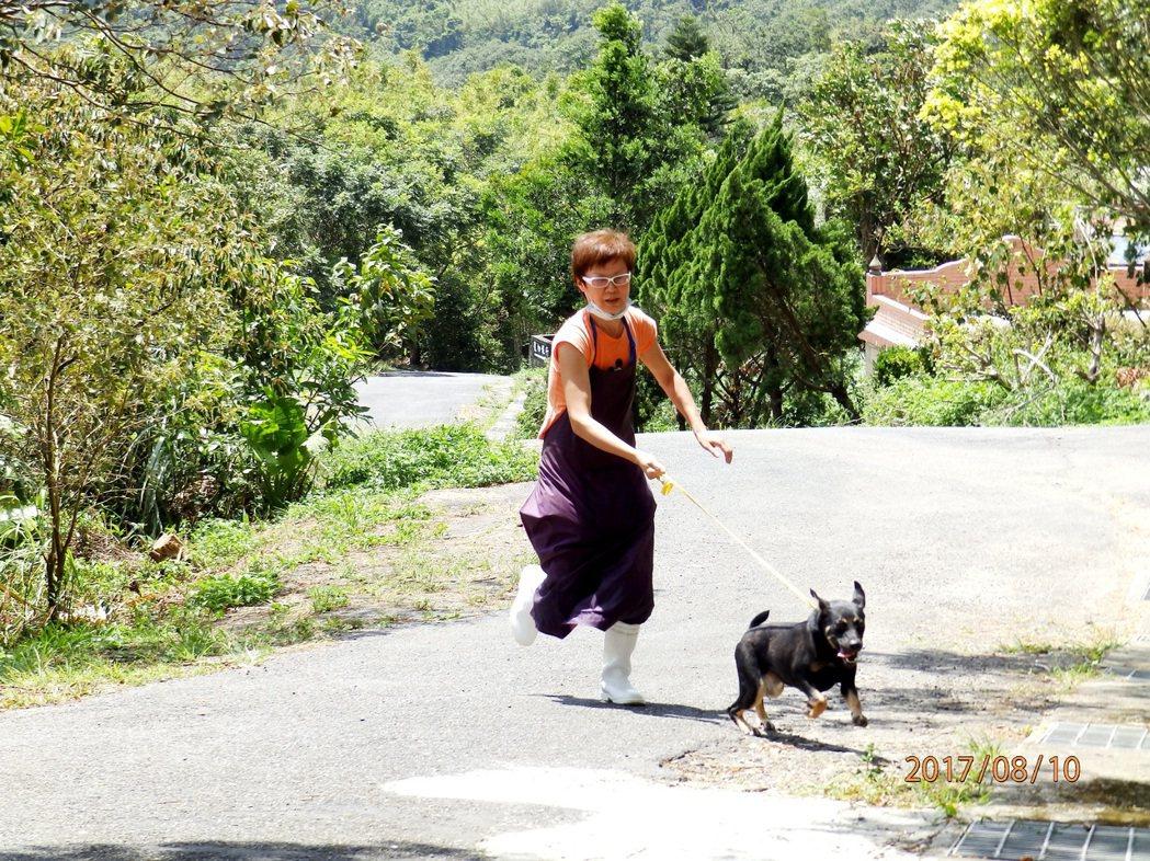 遭棄養的黑狗已由獸醫師完成絕育、施打疫苗,可愛親人,開放民眾認養。圖/動保所提供