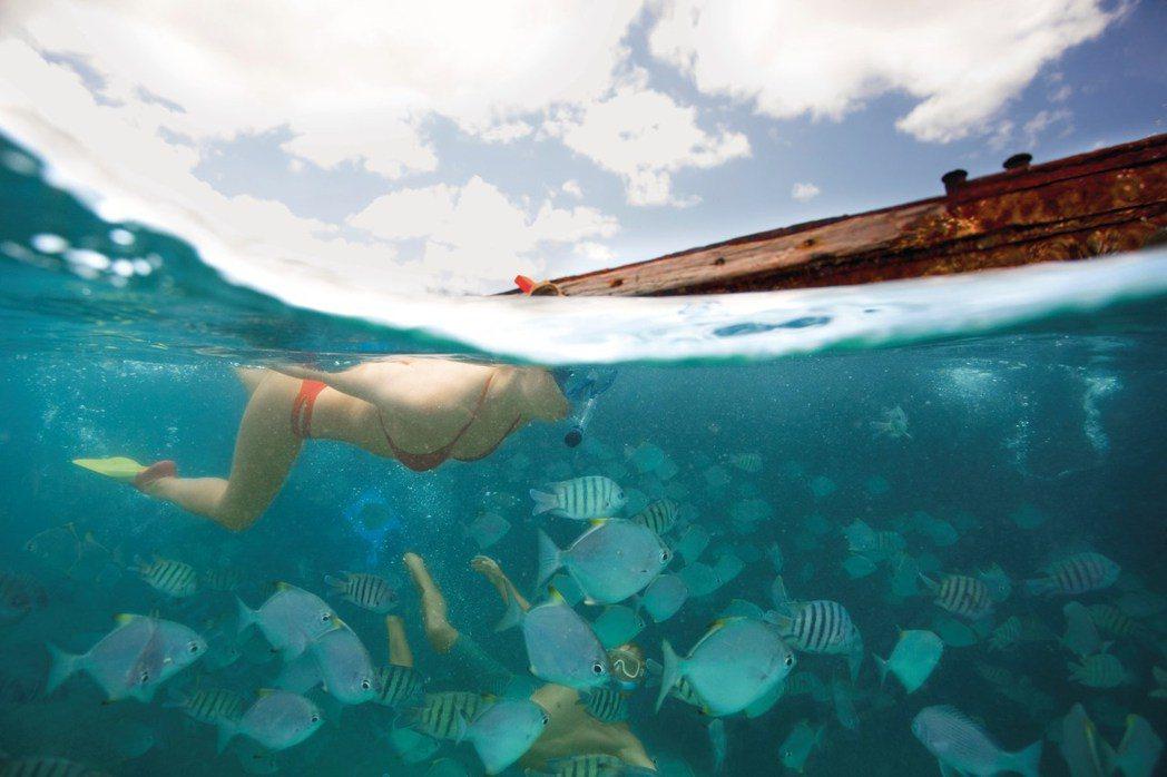 在沉船遺跡、珊瑚、魚群中浮潛共游。圖/昆士蘭旅遊及活動推廣局提供