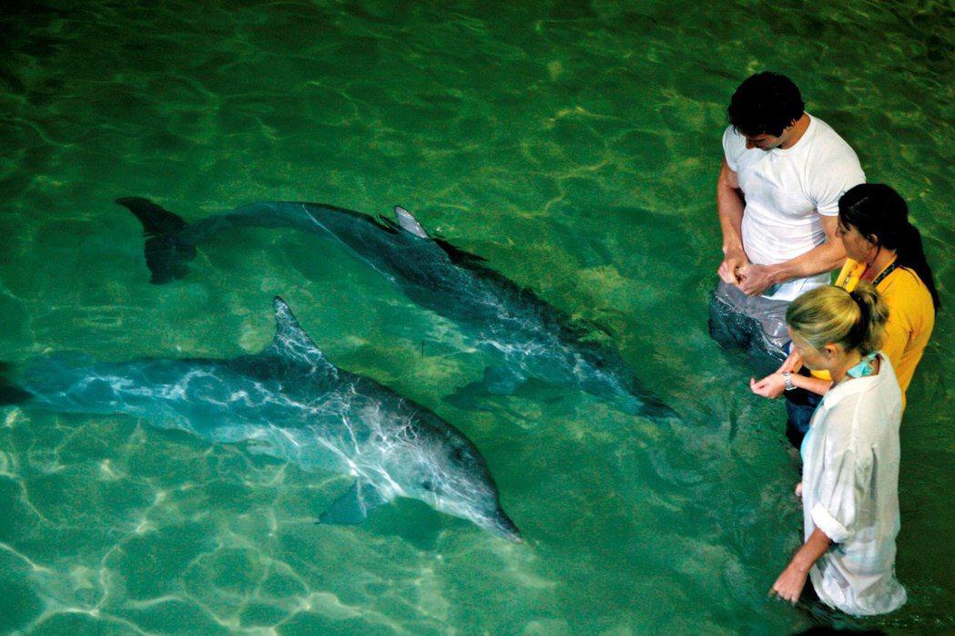晚上可餵食野生海豚,體驗獨特島旅文化。圖/昆士蘭旅遊及活動推廣局提供