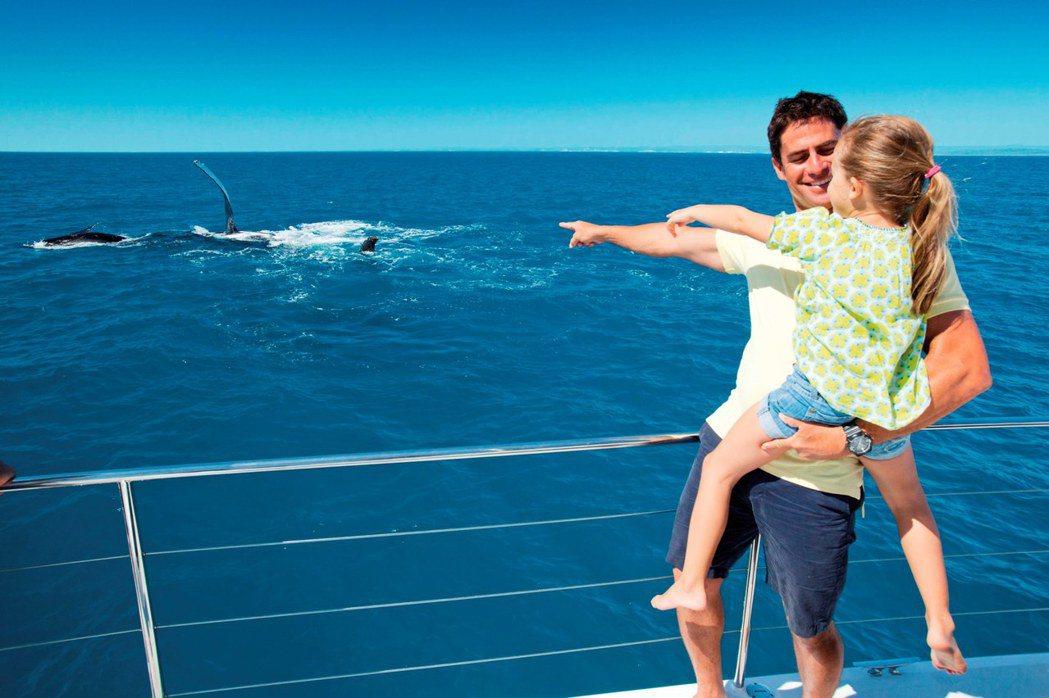 有機會在摩頓島近距離觀賞鯨魚躍出海面的姿態。圖/昆士蘭旅遊及活動推廣局提供