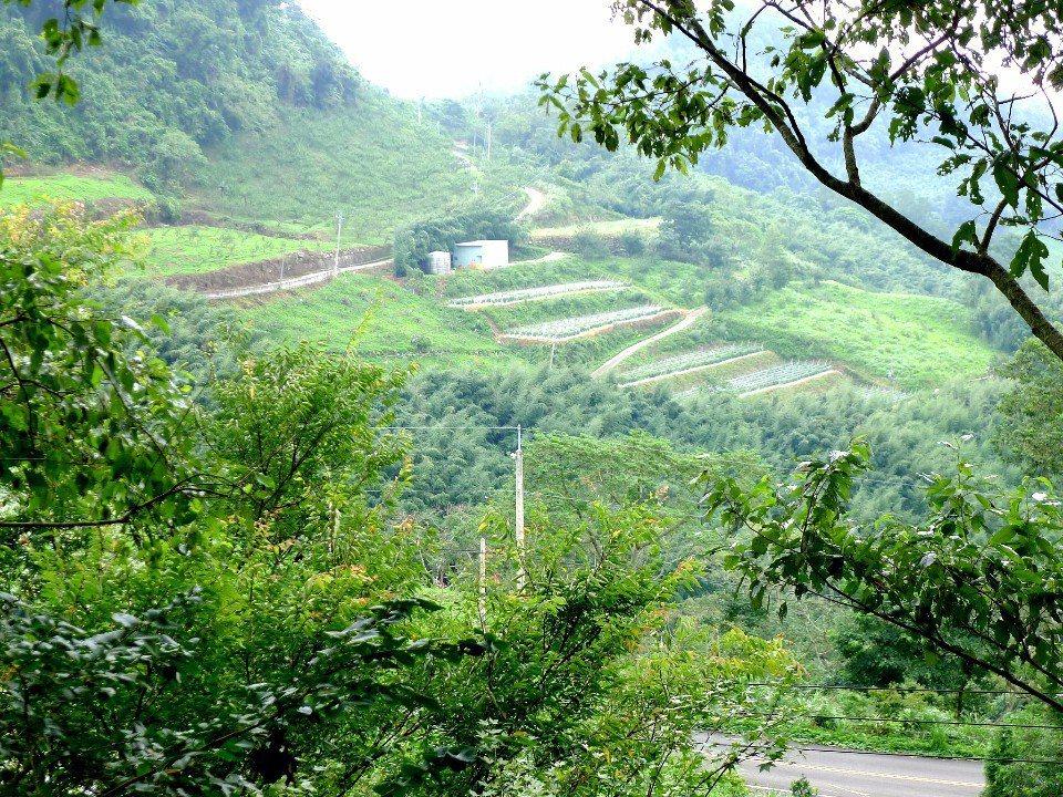 「石水坊露營區」的營位以梯田方式分布,層層往上堆疊。(圖片來源/石水坊粉絲團)