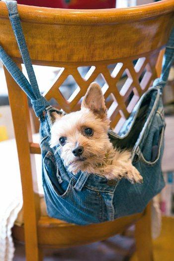 谷島女士養了8年的愛犬羅莉。 圖/《一個人的生活:雖然有點寂寞,卻獨享自在》
