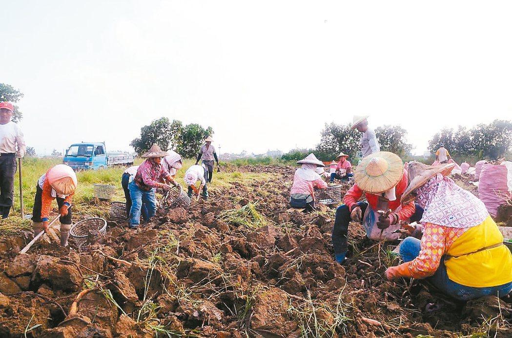 尼莎暨海棠颱風造成農林漁牧業產物損失合計2.7億元(其中農產損失2.5億元),依...