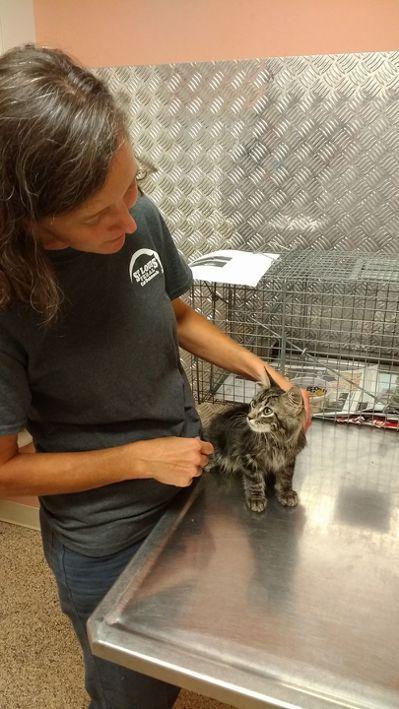 透過當地動物組織的幫助,紅雀找回帶來好運的逆轉貓。圖/取自St. Louis F...