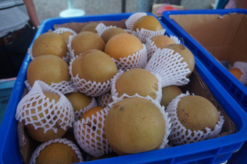 楊梅區公所、農會近年推動水梨產銷已經打出知名度。圖/楊梅區公所提供