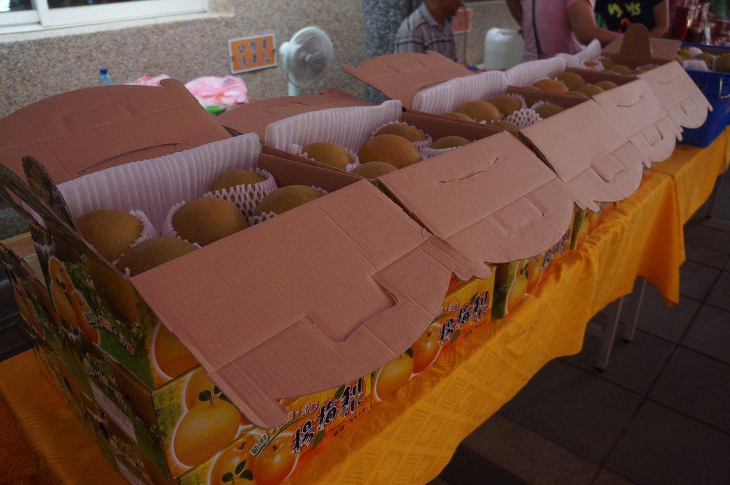 楊梅水梨採分級包裝嚴控品質。圖/楊梅區公所提供