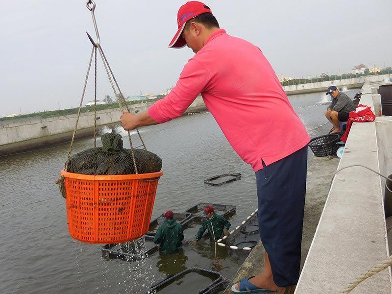 屏東縣沿海四鄉鎮從東港、林邊、佳冬、枋寮都是主要水產養殖區域。圖/報系資料照