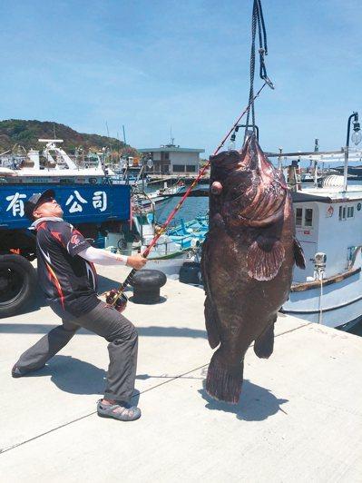 洪姓釣友在北方三島海域釣到1尾超大的七帶石斑,重達161台斤。 記者曾健祐/翻攝