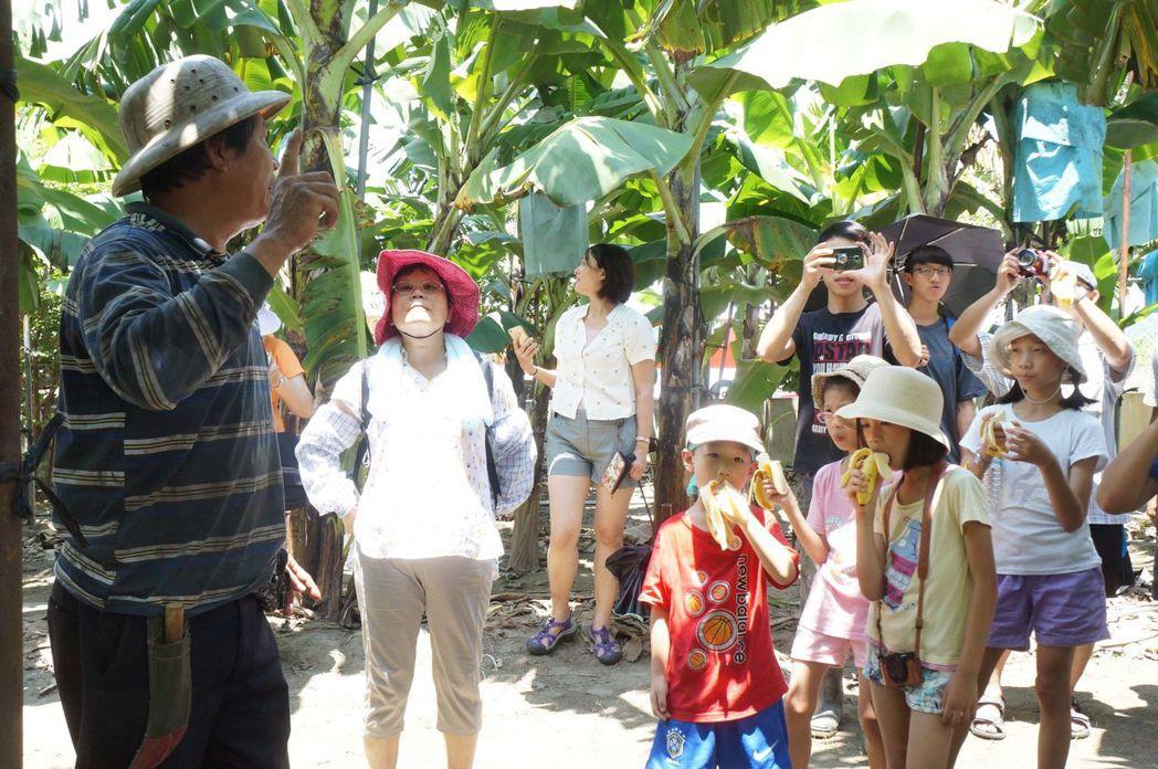 香蕉園導覽及認養香蕉樹活動(圖/文 聯合數位文創)
