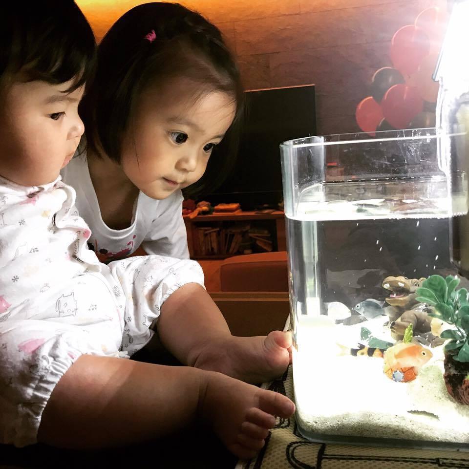 咘咘(後)與Bo妞姊妹緊盯魚缸。圖/摘自臉書