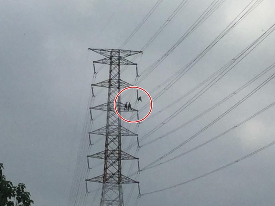 台電員工電塔驚險維修 網友敬禮更罵高層「只會鬥」