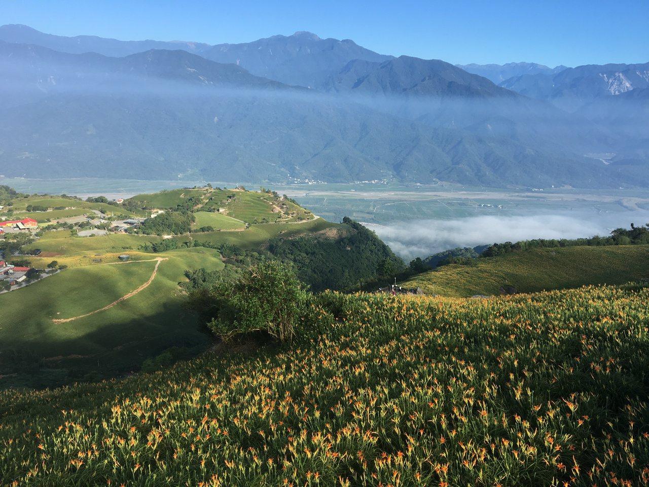 滿山的金黃花海配上藍天白雲,讓遊客彷彿置身於國外。 記者徐庭揚/攝影