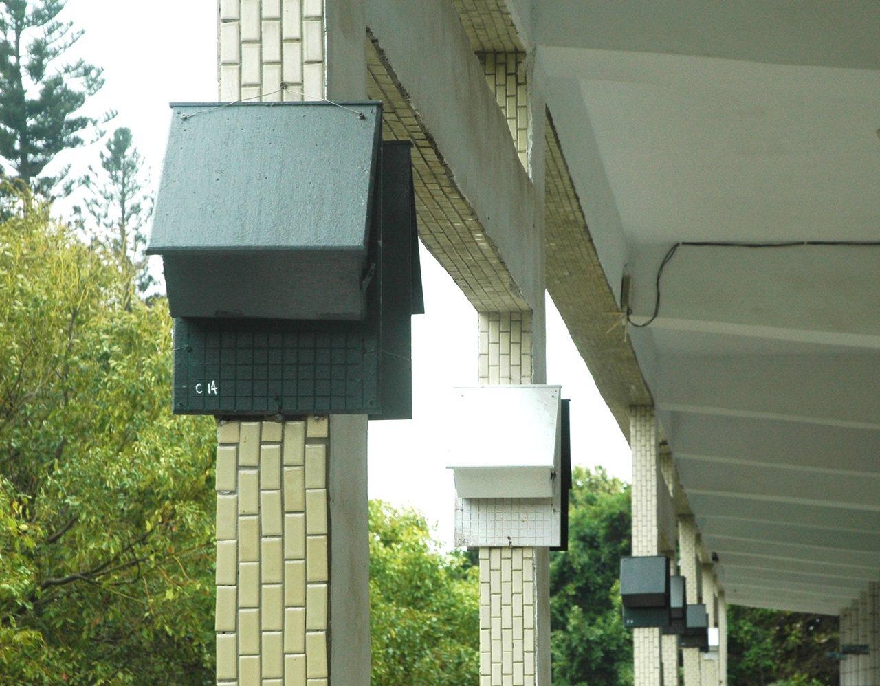 雲林蝙蝠館在雲嘉地區各校廣設蝙蝠屋,住屋率高,使蝙蝠數量大增,保育成功。記者蔡維...