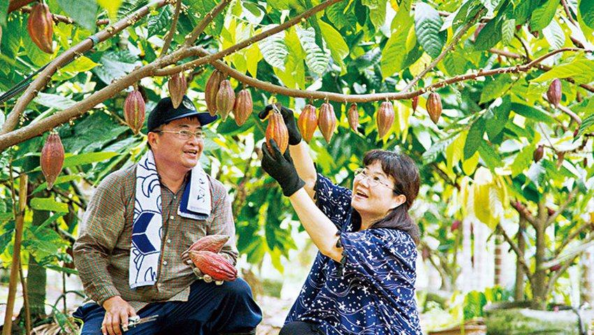 喜樂可可咖啡園主人張凱晃和陳美芳利用嫁接苗,短短8個月即可收成,並降低品種不確定...