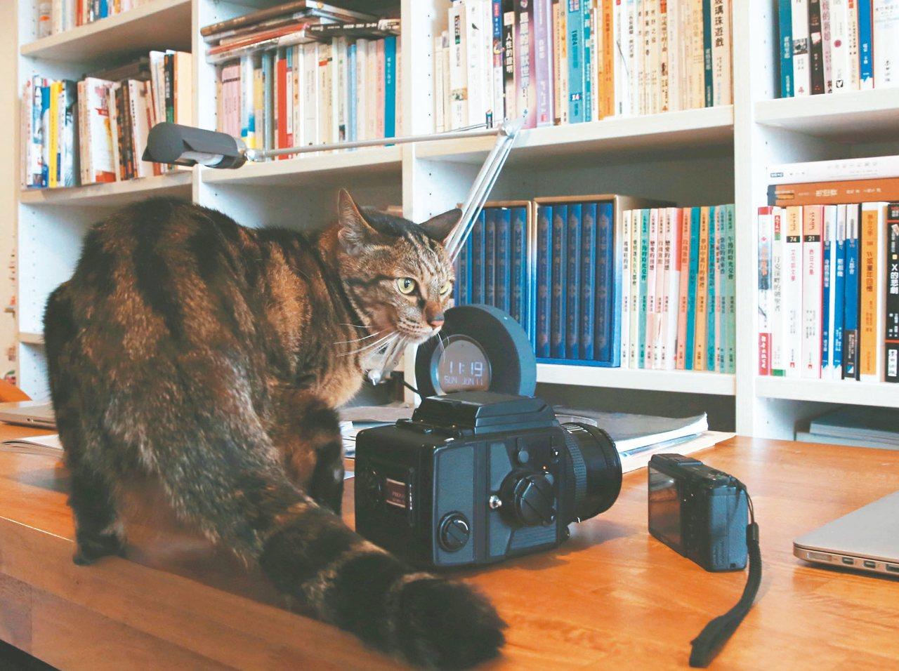 王聰威說:「小貓愛我。」 圖╱本報記者黃義書攝影