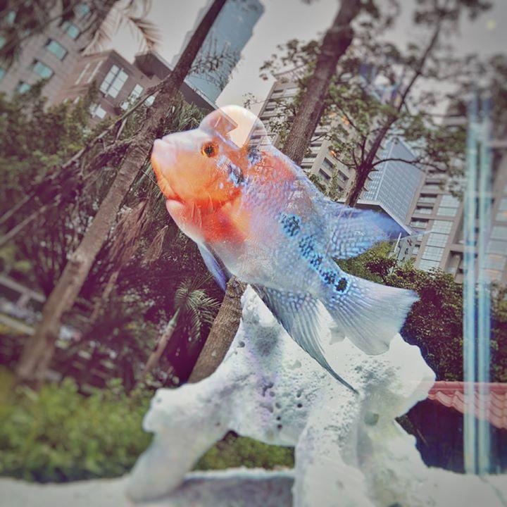 張立昂日前透露愛魚去世。圖/摘自臉書