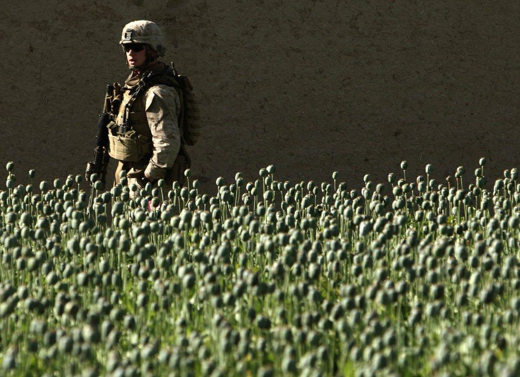 一名執行巡邏任務的美軍走過阿富汗法拉省的罌粟田。罌粟是製作鴉片的主要原料。 (路...