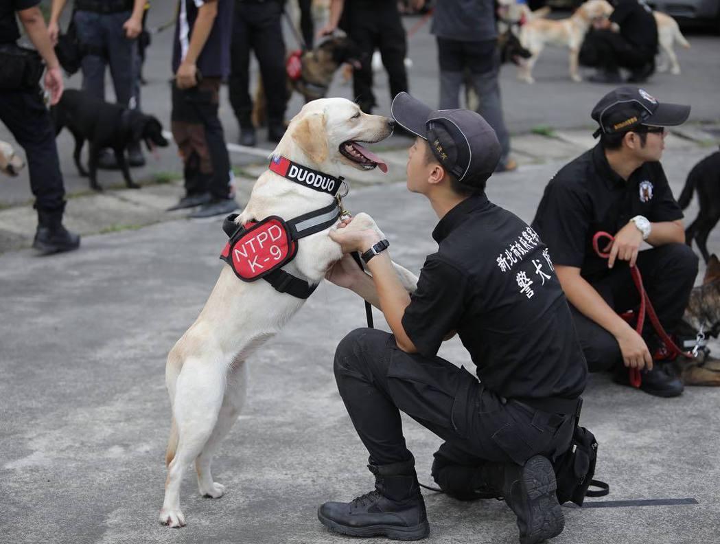 許多領犬員為狗狗成立社群帳號,吸引眾多粉絲,堪稱最強網紅,圖為新北市警犬隊的多多...