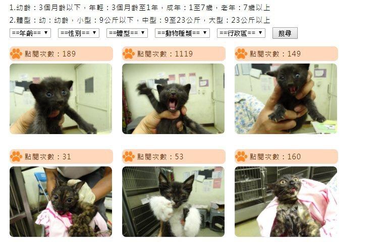 圖片來源/台北市動物保護處