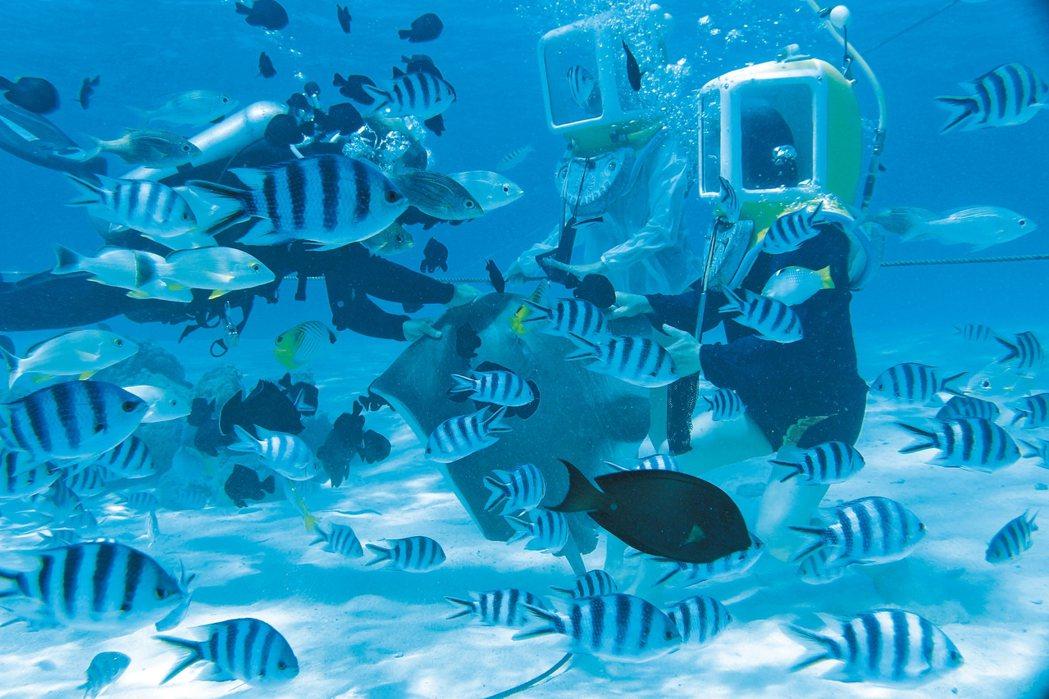對於喜愛戲水活動的旅客,格林亦可安排波拉波拉海底漫步行程。 圖/格林旅遊