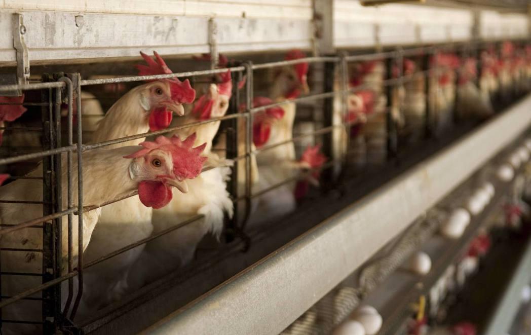 自7月1日至8月15日間生產的四千多萬顆雞蛋中,有3416顆「下落不明」。 ...