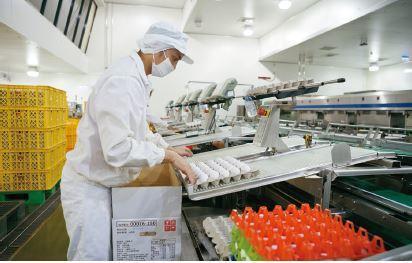 大武山牧場透過十多道洗選流程消除雞蛋表面的細菌,再經過重量分級後裝箱出貨。 攝影...