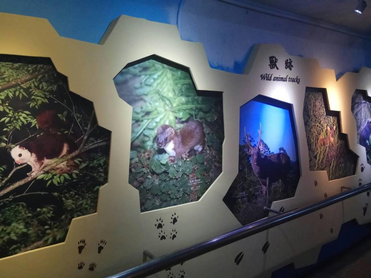 太魯閣國家公園從低海拔到高海拔有各種不同的生態系及物種,遊客可以透過攝影圖片,一...