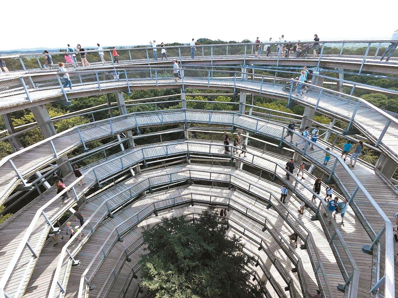 呂根島鷹巢樹冠步道。 陳思宏圖片提供