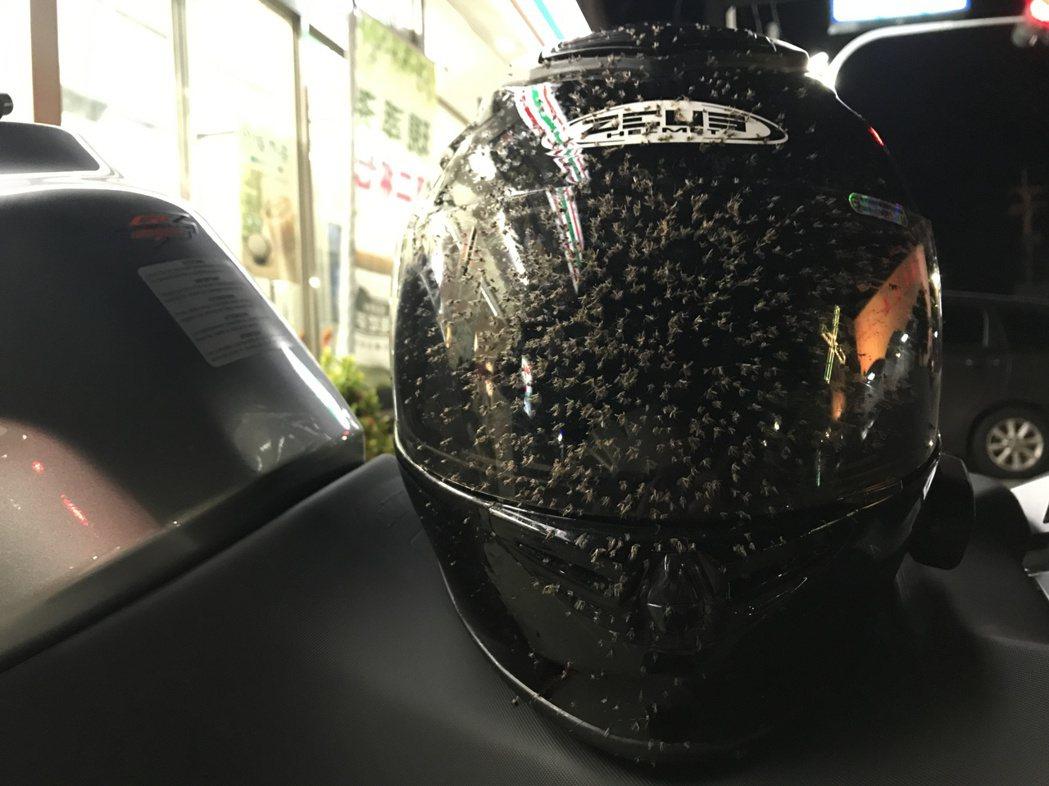 安全帽上滿滿的蟲屍。記者林昱丞/攝影