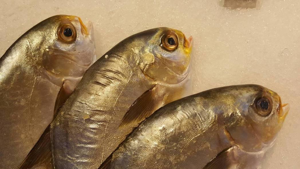魚眼窩附近油脂富含DHA,而根據醫學研究,DHA有助於促進腦部和視網膜的發育。記...