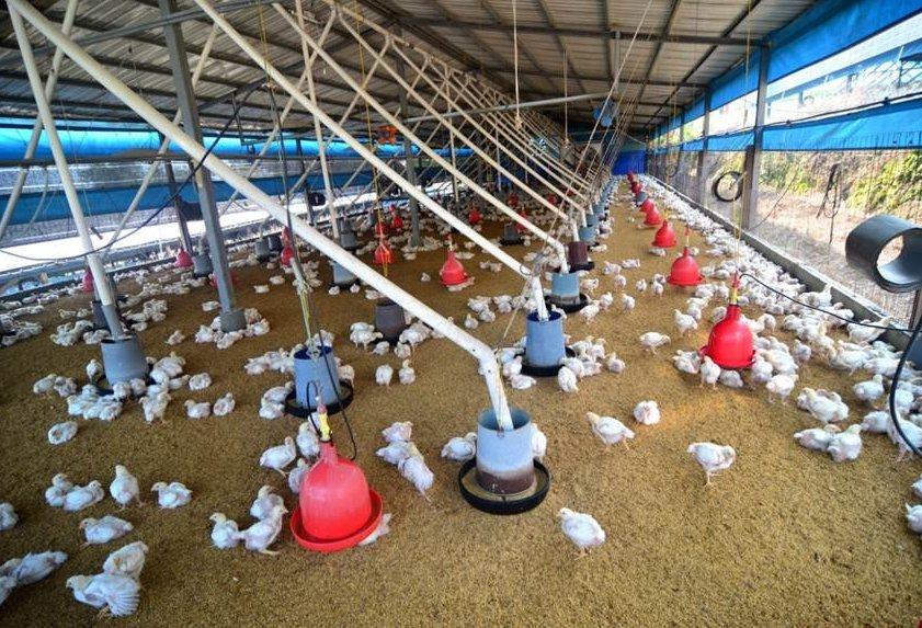 傳統養雞場,圖為示意圖。(嘉義縣政府)