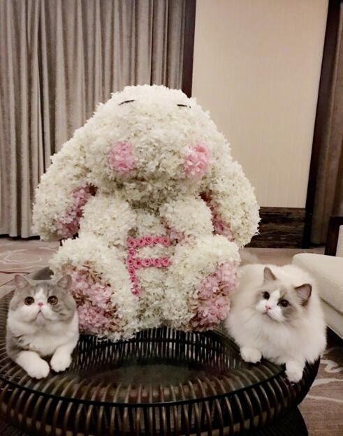 范冰冰也分享疑似男友李晨送的七夕禮物,2隻毛小孩也萌入鏡。圖/摘自微博