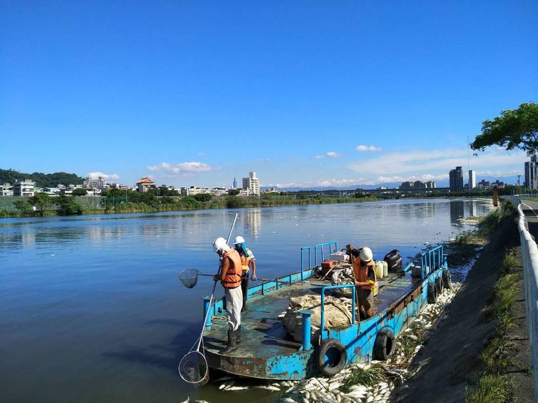 台北市基隆河沿岸出現大量死亡烏仔魚,綿延河岸數百公尺,畫面驚悚駭人。今天北市水利...