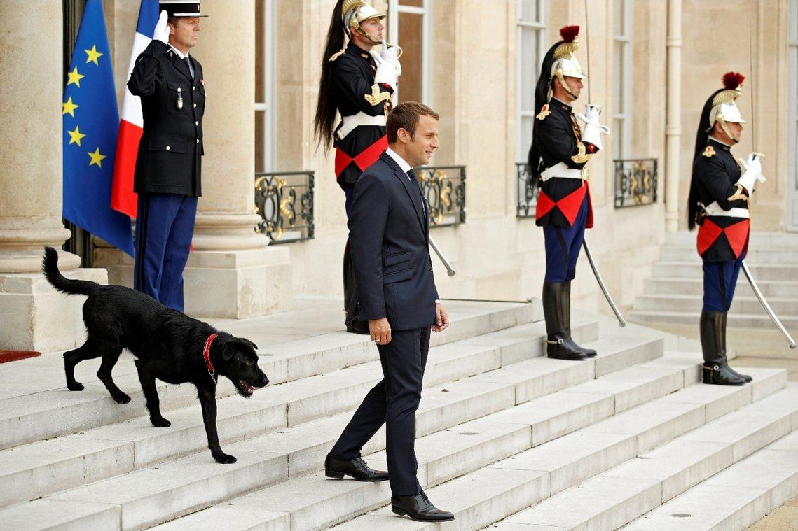 法國總統與法國第一狗。 圖/歐新社