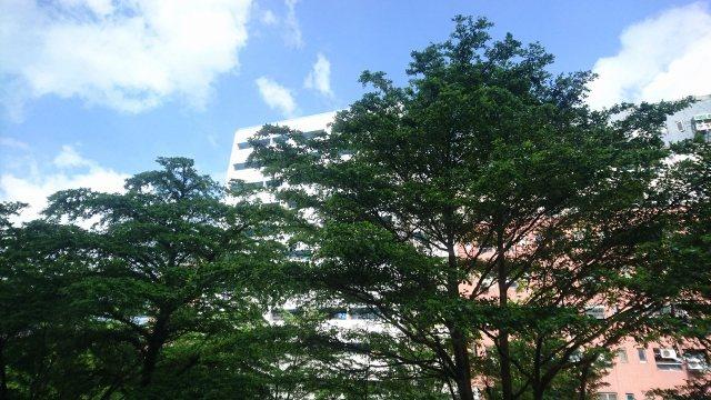 房間窗外望去的藍天綠樹。 徐谷楨/攝影