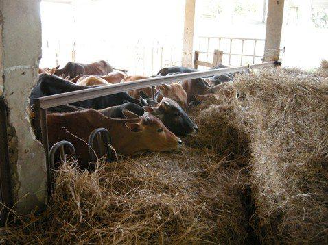 動物保護是基於生物親疏的本能,還是宏觀的生態考量?