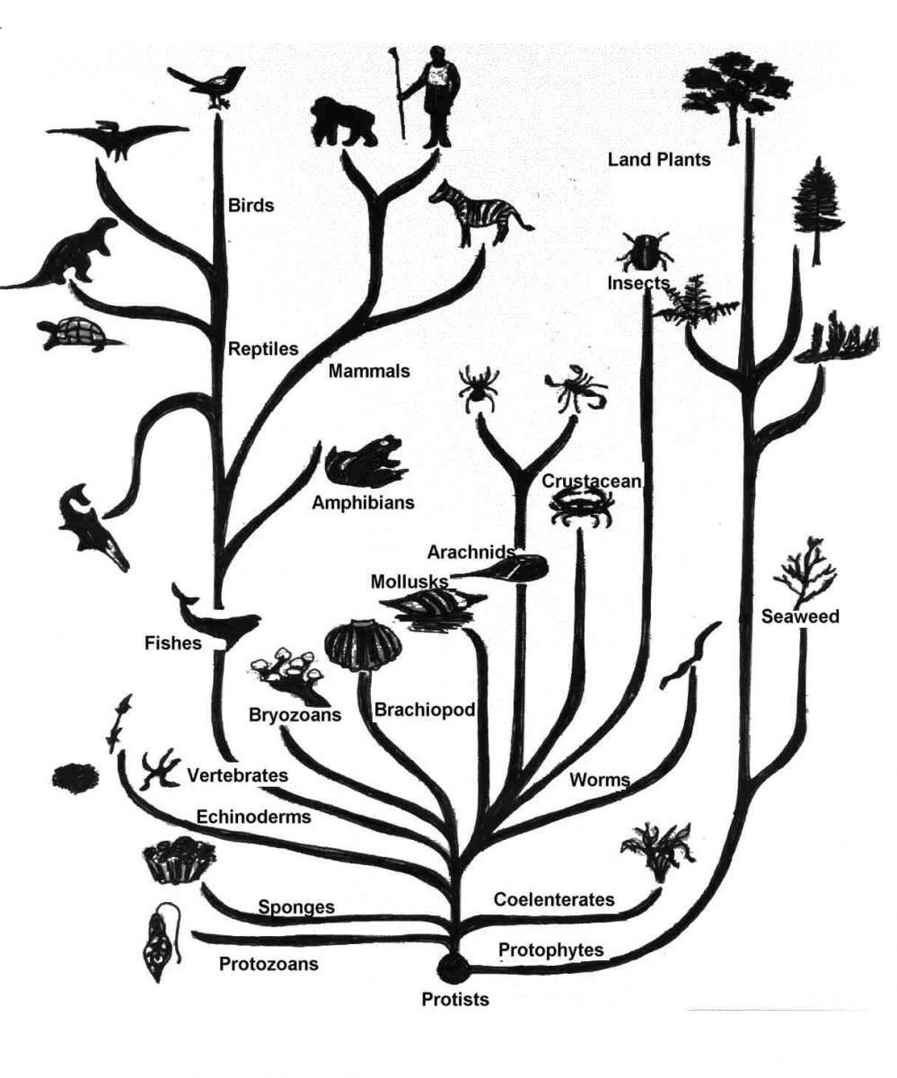 演化樹。 圖/取自evolutionfaq