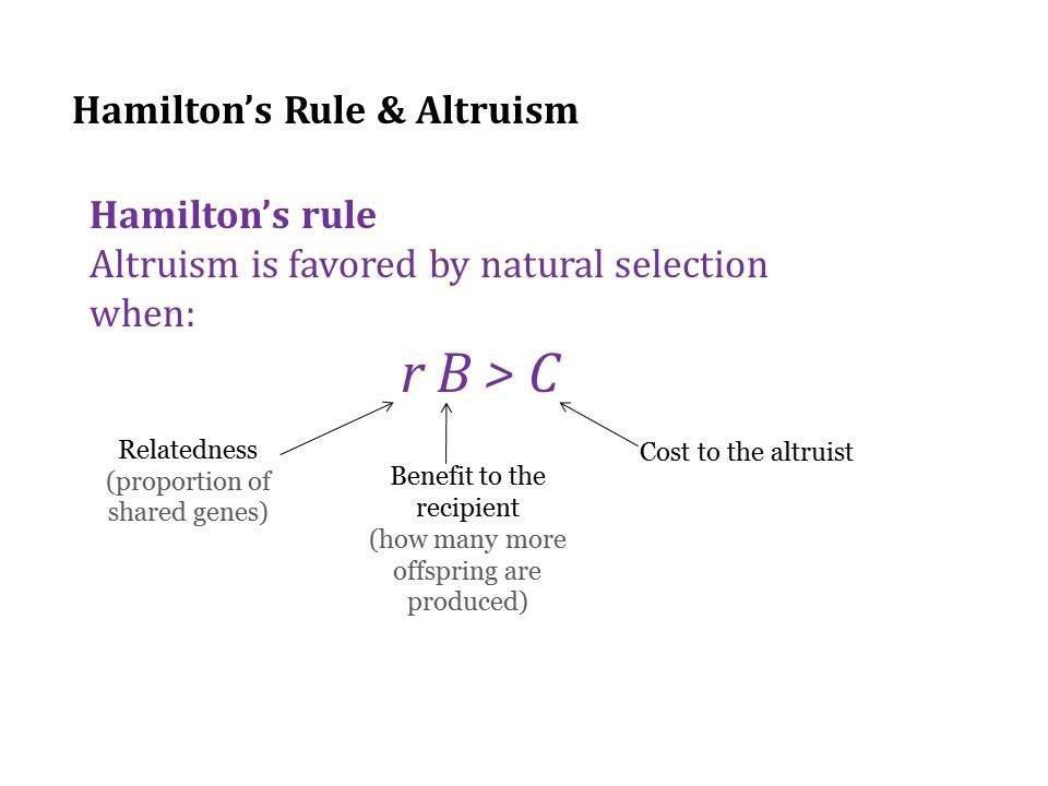漢彌頓公式。 圖/取自Hamilton's Rule