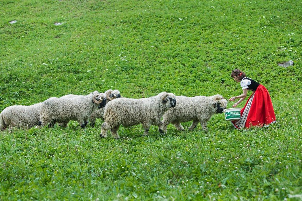 LuLu在馬特洪峰區與黑面羊群拍攝MV。圖/環球提供