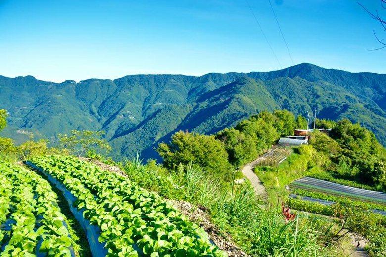 羅慶郎的自然農場,展現混林農業。 圖/作者提供