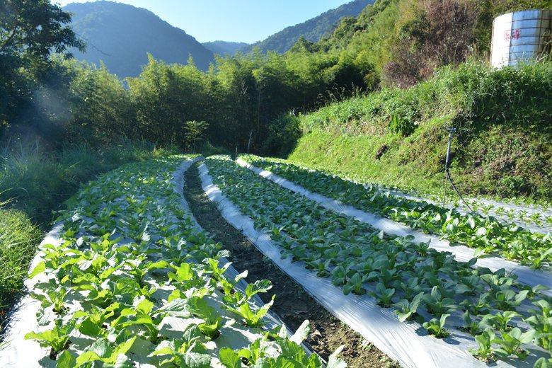 原地主本原來從事慣行農業,但土地休耕後租借給族人從事有機農業,改變大規模的單一種...